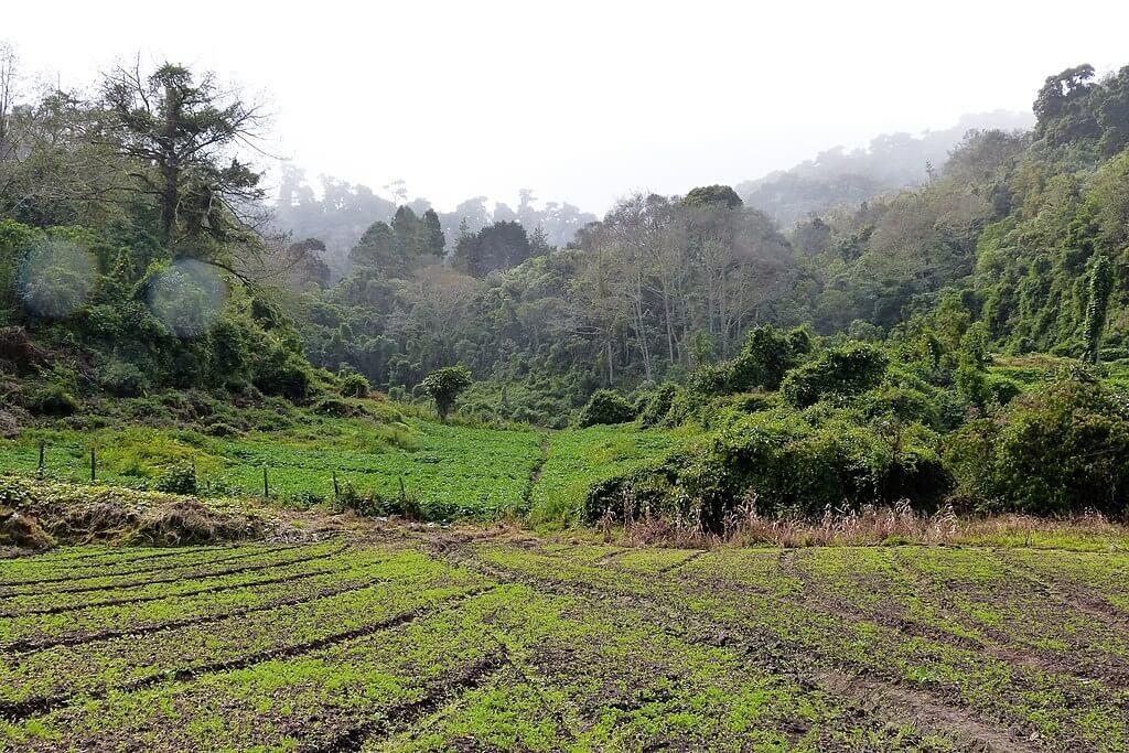 10. The Quetzal Trail - Panama